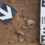 Joniškės kapinynas - perkasa Nr. 11, degintiniai kauliukai in situ